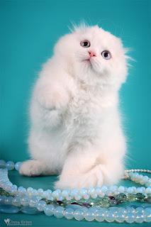 http://lalellecats.blogspot.com/p/blog-page_15.html