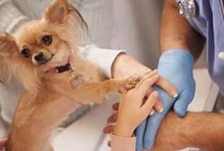 Pet питання здоров'я