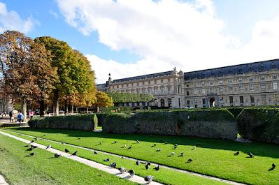 Pigeon Time under the sun in Paris
