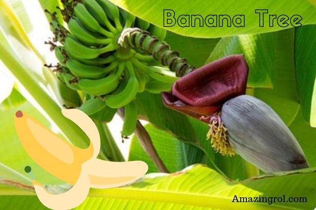 when to eat banana in a day,best time to eat banana for weight loss,right time to eat fruits