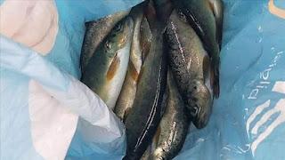 غرامة مالية كبيرة على شخص إصطاد الأسماك بالصعق الكهربائي جنوب تركيا