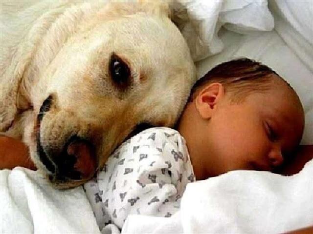 Собака притащила младенца