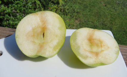 Cut apple with glassy, translucent regions in the flesh near one side.