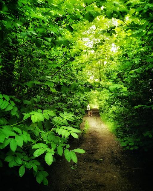 green forest in Connemara
