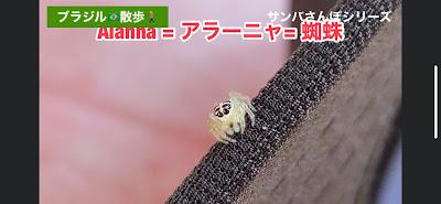 美しいブラジルの蜘蛛