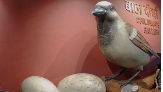 Bihar Museum sparrow HD