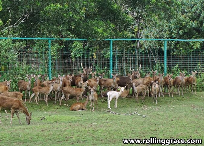 batas ubi deer farm at yan kedah
