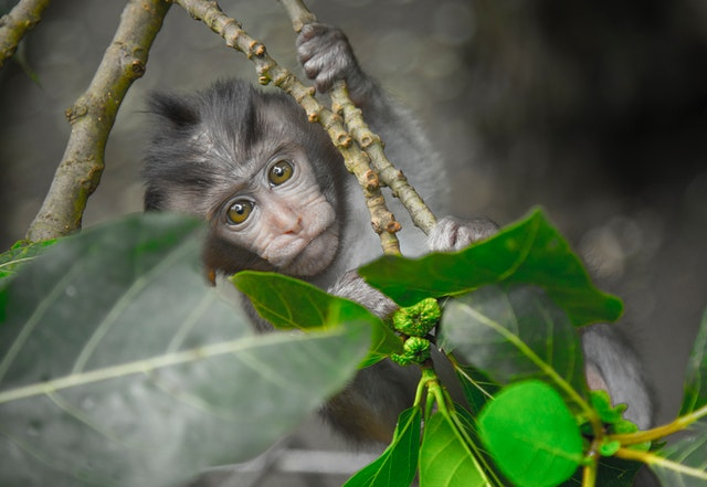 Monkey holding tree.
