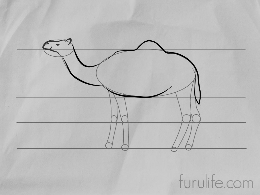 How to draw Camel - Step 5
