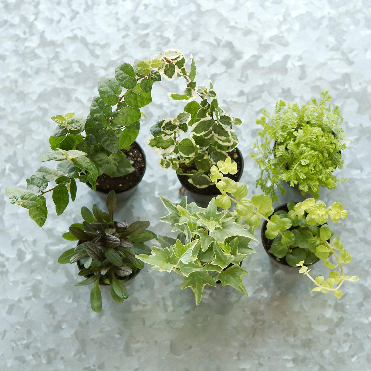 the fern and mossery terrain terrarium plant kit. Black Bedroom Furniture Sets. Home Design Ideas