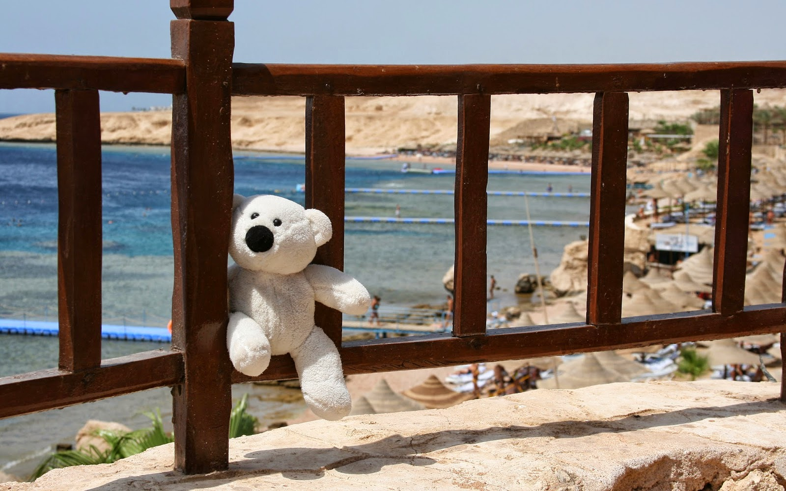 Free-download-HD-Toy-Teddy-left-alone-2560x1600.jpg