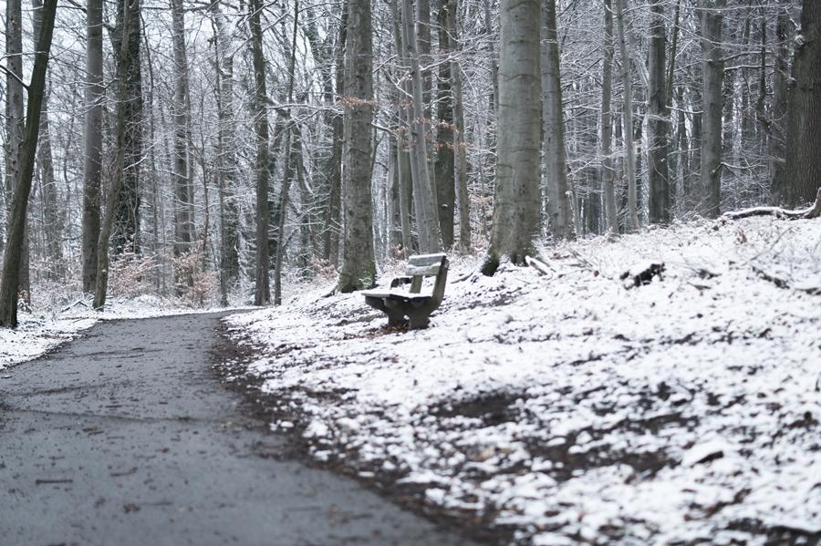 Blog + Fotografie by it's me! - Draussen - Frau Frieda sucht Schnee, verschneiter Waldweg, eine Bank und ein Fußweg