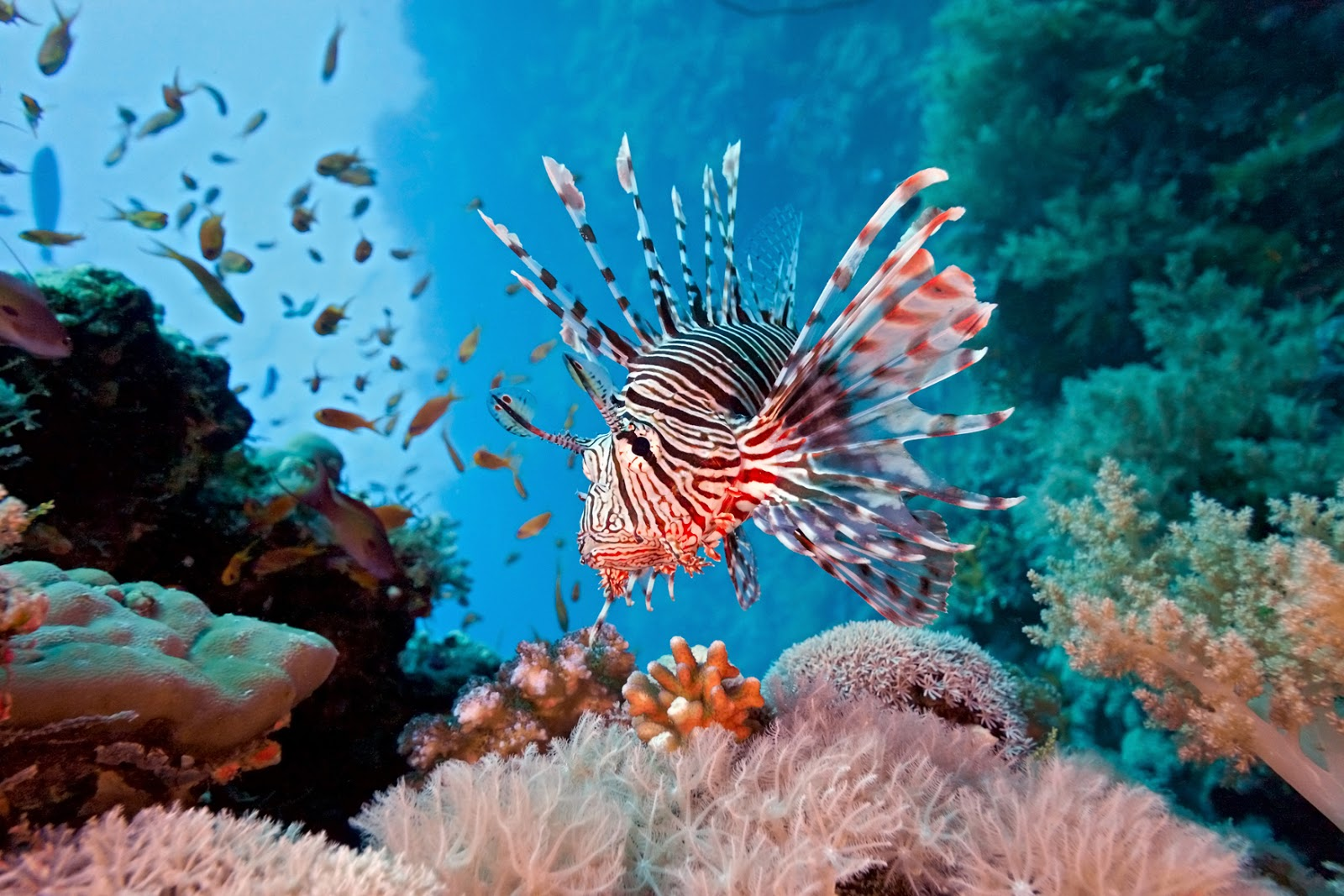 coral reef fish earth blog