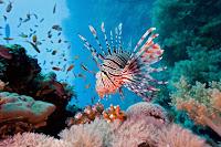 Coral reef fish 18