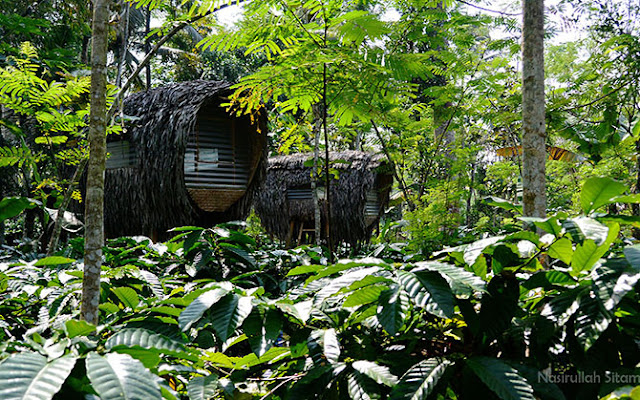 Omah Kelingan Temanggung dengan bentuk rumah yang unik