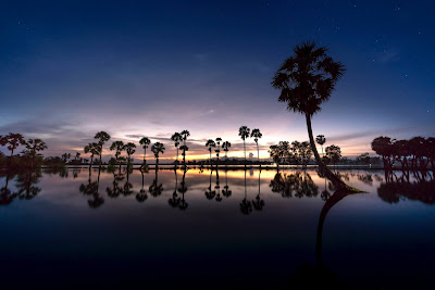 photo of a beach with palm trees and reflections