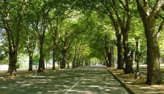 Tebang Pohon di Kota Bandung Didenda Rp 2 Juta