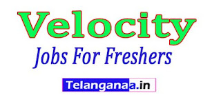 Velocity Recruitment 2017 Jobs For Freshers Apply