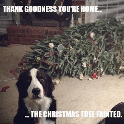 Funny Christmas Memes to Share - Funny Christmas Memes #jokestotell #funnymemes