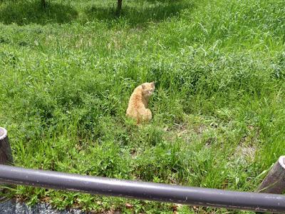 深北緑地公園の猫