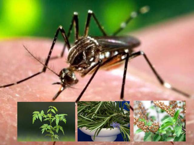 डेंगू-मलेरिया के मच्छरों से बचने के लिए कैसे करें तैयारी, जानें ये खास टिप्स