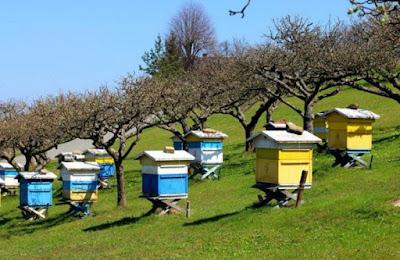 Nομοθετικα: Χρήσιμα για νέους και μελισσοκόμους