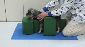 circulação sanguínea de cães com fraturas