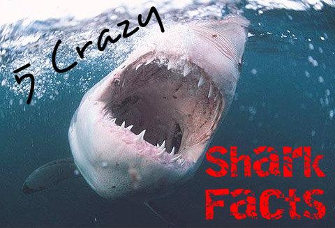 5 Crazy Shark Facts