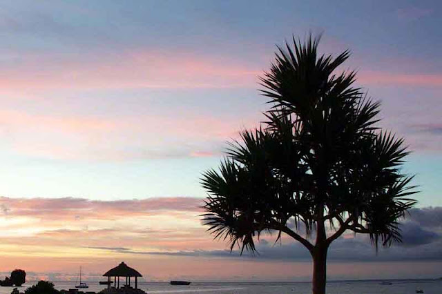pink and blue sunset at beach, tree