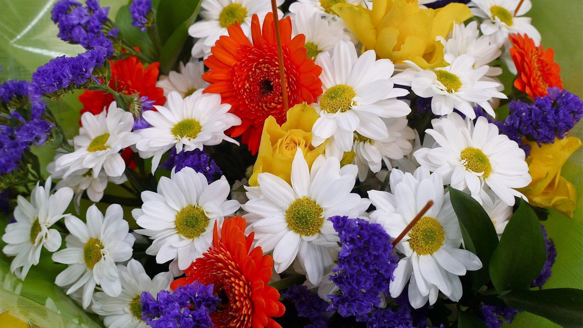 colorful flowers flora hd flowers Wallpaper