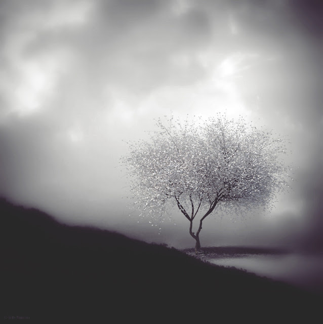 beautiful fine art bw landscape