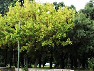 Parque O'Higgins, Cidade de Mendoza