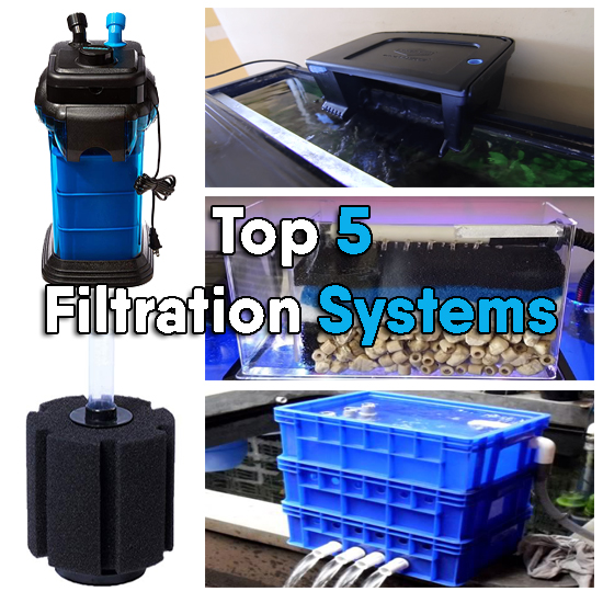Top 5 Filtration Systems Used In Aquarium
