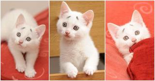 Γάτα γεννήθηκε με ένα μόνιμο βλέμμα έκπληξης και όλο το διαδίκτυο την έχει λατρέψει