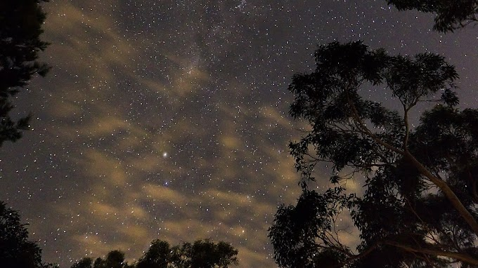Papel de Parede Via Láctea Vista da Floresta