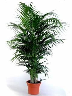 Anspruchslose Zimmerpflanzen