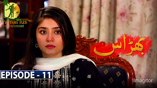 Bharaas Episode 11 - 20th October 2020 - DramaPlus Entertainment_HD