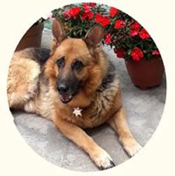 Bienestar Canino cover image