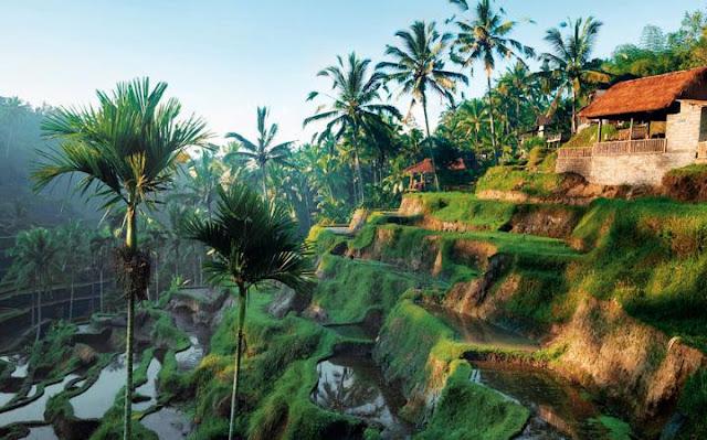 Ubud, Bali. (indosurflife.com)
