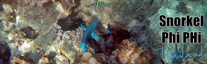 Snorkel Islas Phi Phi, Tailandia