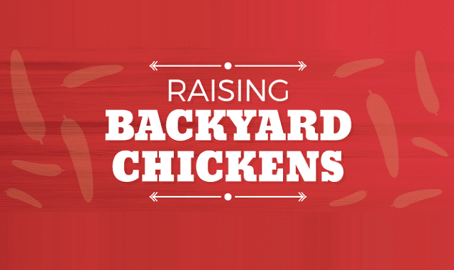 Raising Backyard Chickens