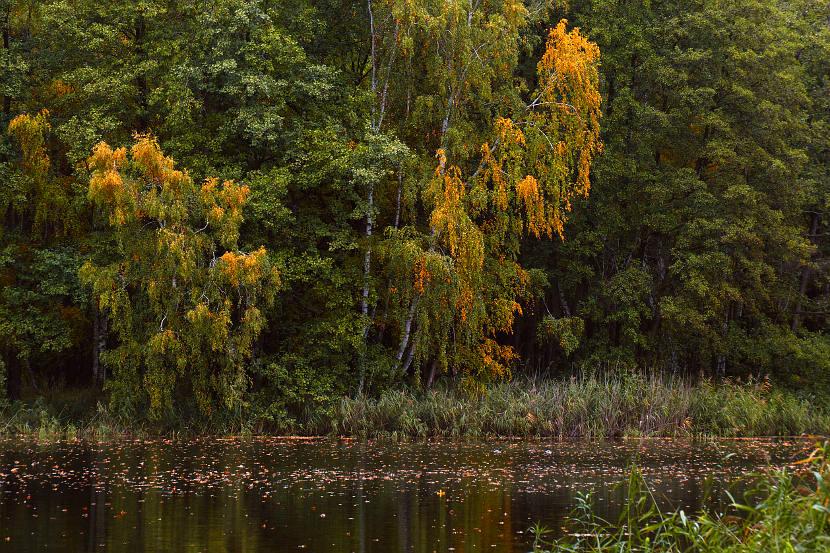 Stawy Milickie - zespół stawów Żabieniec jesienią