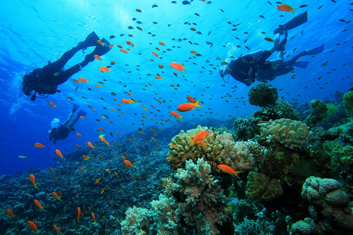 Indonesia Surganya Para Penyelam