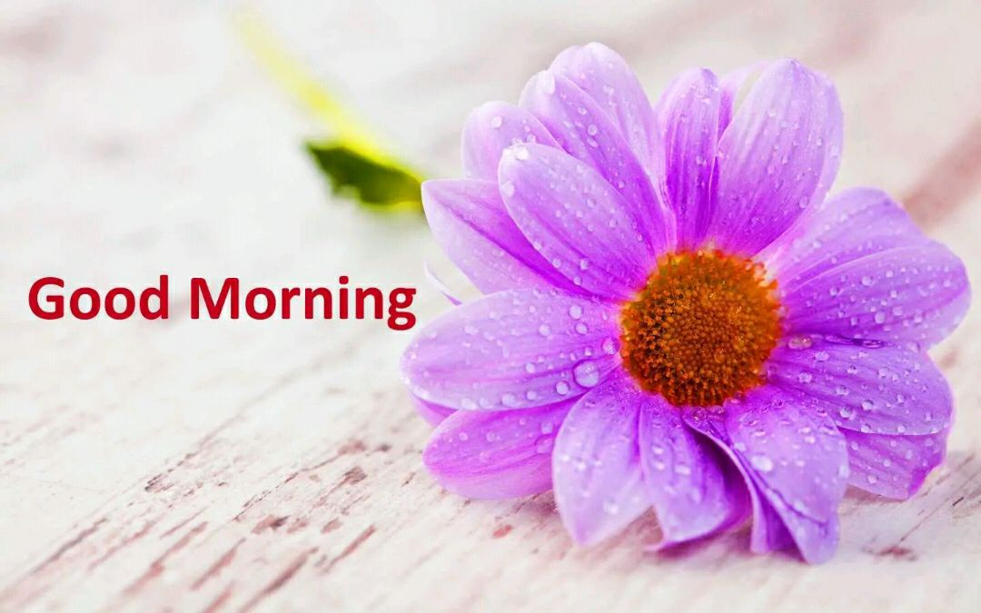 Love Good Morning Images Hd