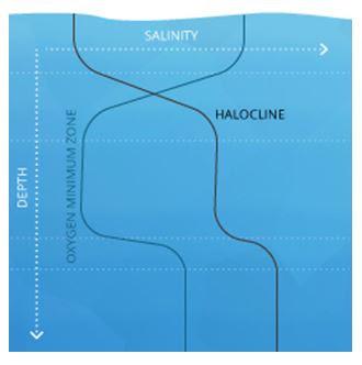 Stratifikasi Vertikal pada kolom air karena Perbedaan Salinity