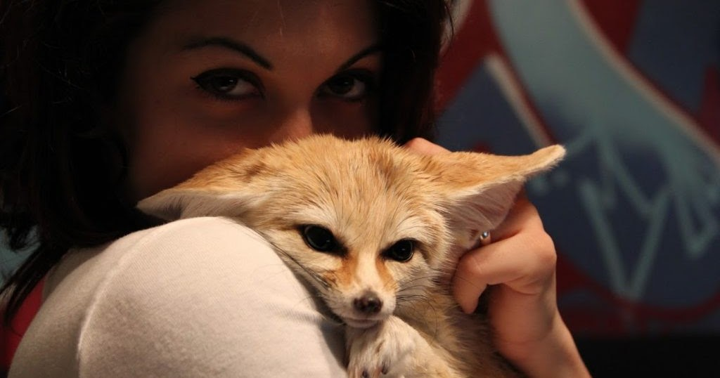 Should You Get A Fennec Fox As A Pet? | eZine Insider