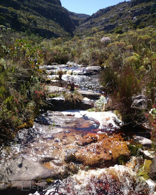 Table Mountain stream in October