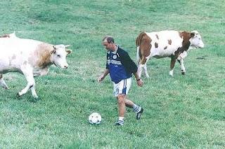 Vaca campo de futbol