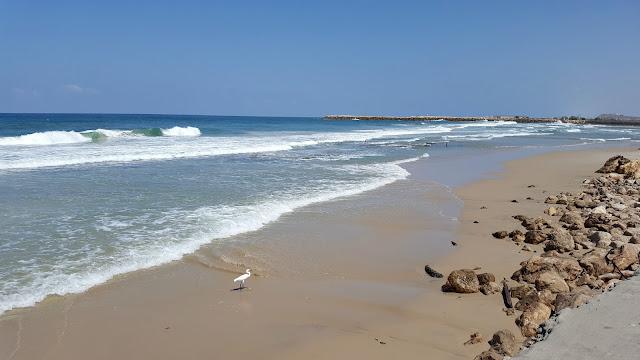 החוף של נמל תל אביב וחסידה
