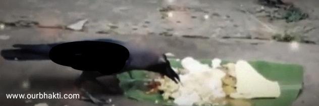 पितृ पक्ष में कौवे को भी खाना खिलाना चाहिए